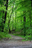 madeiras e trajeto obscuro Foto de Stock
