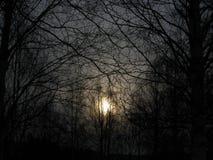 Madeiras escuras Fotografia de Stock