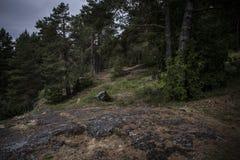 Madeiras escuras contra céus tormentosos com arbustos e as árvores verdes imagens de stock