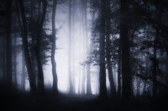 Madeiras escuras encantados com névoa e luz misteriosa Imagem de Stock