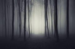 Madeiras escuras profundas na noite de Dia das Bruxas Fotos de Stock