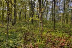 Madeiras grandes parque estadual, Minnesota imagem de stock royalty free
