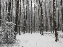 Madeiras invernal imagens de stock royalty free