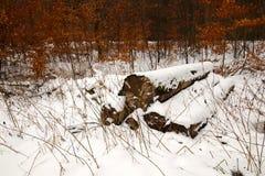 Madeiras menores nevado da pilha da lenha em fevereiro foto de stock royalty free