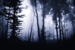 Madeiras misteriosas escuras com névoa na noite Foto de Stock
