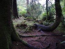 Madeiras misteriosas na costa de Oregon foto de stock royalty free
