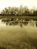 Madeiras na beira do lago, sepia Fotografia de Stock Royalty Free