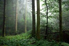 Madeiras na névoa abaixo imagens de stock royalty free