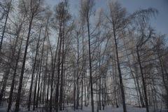 Madeiras na neve imagem de stock royalty free