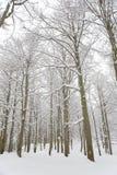 Madeiras nevado imagens de stock royalty free