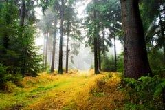 Madeiras nevoentas 2 fotografia de stock royalty free