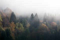 Madeiras nevoentas Fotos de Stock Royalty Free
