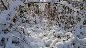 Madeiras no inverno Foto de Stock Royalty Free