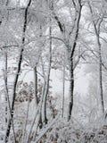 Madeiras Snow-covered Imagem de Stock
