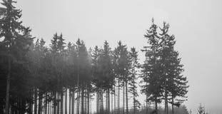 Madeiras solitários em preto e branco Imagens de Stock Royalty Free