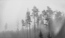 Madeiras solitários em preto e branco Imagem de Stock