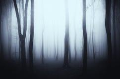 Madeiras surreais com névoa através das árvores Foto de Stock