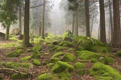 Madeiras verdes Imagem de Stock