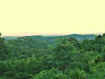 Madeiras verdes em Tailândia Fotografia de Stock Royalty Free