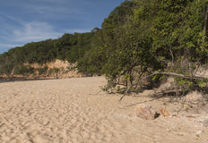 Madeiro海滩-负子蟾海滩, RN,巴西 免版税图库摄影