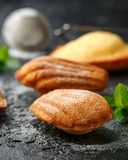 Madeleine French small cake, cookies shell on rustic background.  stock photos