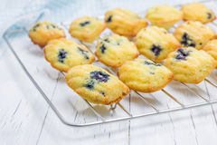 Madeleines with blueberries on a cooling rack. Homemade madeleines with blueberries on a cooling rack Stock Photos