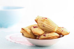 Madeleines royalty free stock image