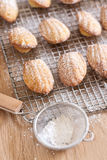 Madeleines. Sugar powdered madeleines. Selective focus Royalty Free Stock Photography