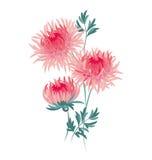 madeliefje bloemenvector royalty-vrije illustratie