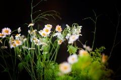 Madeliefjes en ander Wildflower-Bloemboeket in mijn huis Stock Foto's