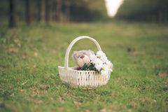 Madeliefjes en teddybeer Stock Foto's