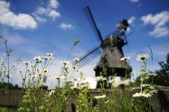 Madeliefjes met windmolen stock afbeeldingen