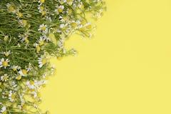 Madeliefjes op een gele achtergrond Stock Fotografie