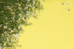 Madeliefjes op een gele achtergrond Royalty-vrije Stock Afbeelding