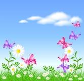 Madeliefjes op het groene gras en vlinders Royalty-vrije Stock Afbeelding