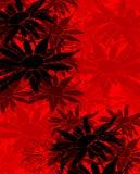 Madeliefjes op rood Stock Fotografie