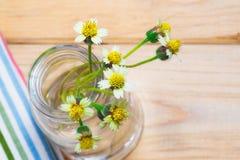 madeliefjesbloemen Stock Afbeeldingen