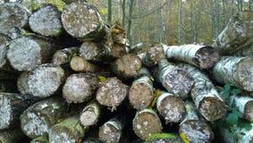 madera Foto de archivo