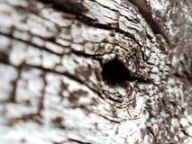 madera Foto de archivo libre de regalías