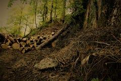 madera fotografía de archivo