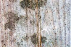 Madera agrietada Imagen de archivo