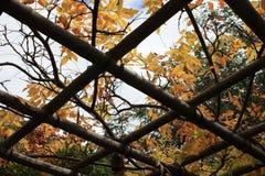 Madera anaranjada del jardín del tejado del otoño imágenes de archivo libres de regalías