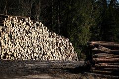 Madera aserrada spruce común Fotografía de archivo
