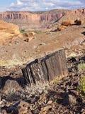 Madera aterrorizada formada después de millones de años Fotos de archivo libres de regalías