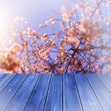 Madera azul de la perspectiva vacía sobre árboles borrosos con el fondo del bokeh, para el montaje de la exhibición del producto Imágenes de archivo libres de regalías