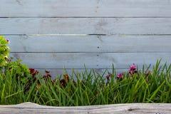 Madera blanca con la hierba y un tronco imagen de archivo libre de regalías