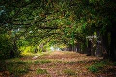 ¡Madera brillante hermosa! El paisaje, árboles, hierba, se va Imagen de archivo libre de regalías