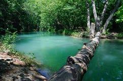 Madera caida a través del río del bosque Imágenes de archivo libres de regalías