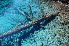 Madera calcificada en agua Foto de archivo libre de regalías