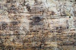 Madera calva sin la corteza Foto de archivo libre de regalías